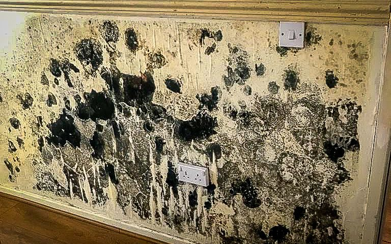 black mould on wall