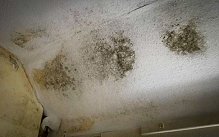 black mould to ceiling, missing insulation